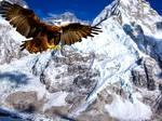 Golden Eagle at Everestt