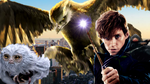 Newt and his creatures