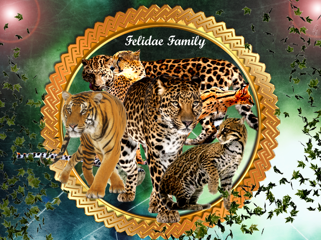 Felidae Family by jillcb