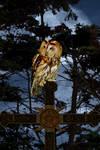 Night Owl by jillcb