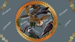 Falcons Falconidae