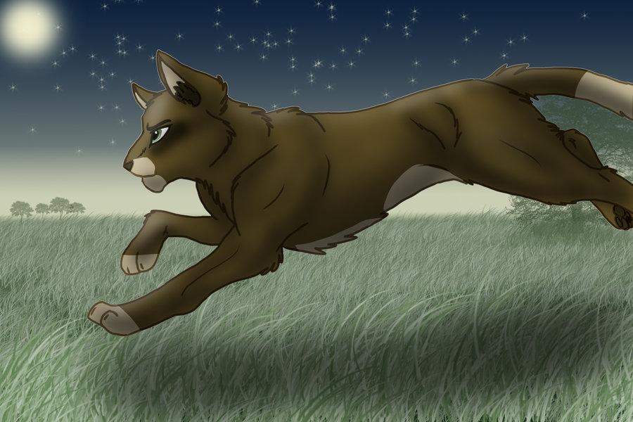 Warrior Cats- Fan Art by Evi1Wo1f on DeviantArt
