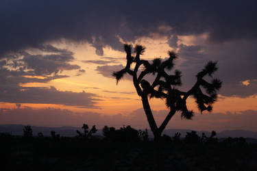 Joshua Tree Silhouette by Revlis777