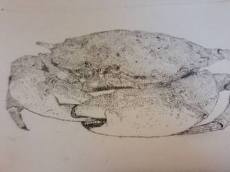 Crab Stippling by ChroniclerofChaos