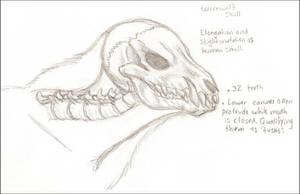 Werewolf Skull by LilMissMousie