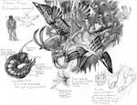 World-Craft: Emperor Flinder