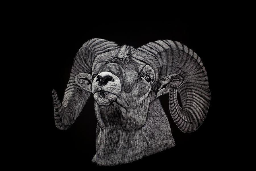 Bighorn Sheep by Lara-Shychoski