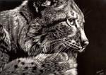 Lynx by Lara-Shychoski