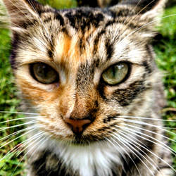 Cat the cat by Colt17752