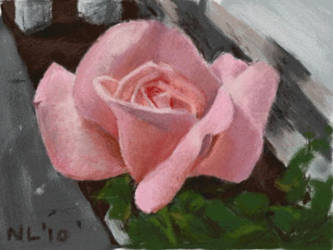Art Academy: Pink Rose by napalmnacey