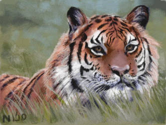 Tiger in the Grass by napalmnacey