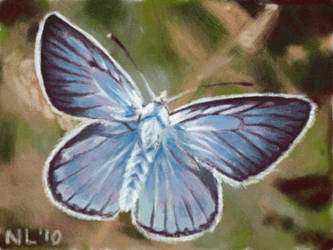 Blue Butterfly by napalmnacey
