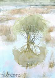 Lake Claremont: Reflections