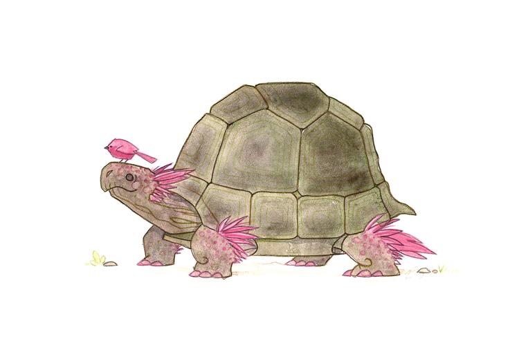 Tortoise and Bird by morganobrienart