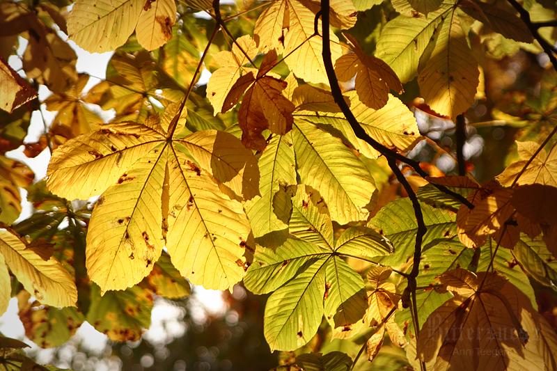 Golden October by Bittersuesz