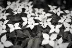 Flowery by Bittersuesz