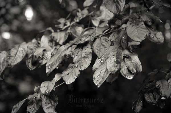 Summer Rain by Bittersuesz