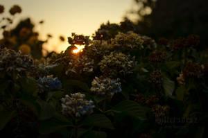 Magic of Summer by Bittersuesz