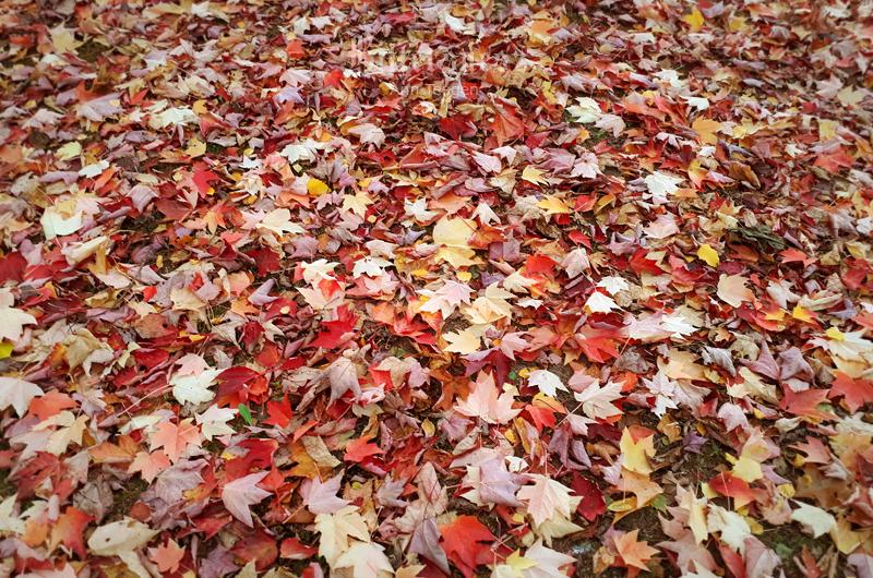 Herbstwonne by Bittersuesz