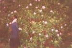 Rhododendron by Bittersuesz