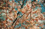 Spring Pink I by Bittersuesz