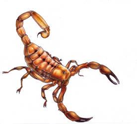 Scorpion by mishappen