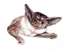Pallid Bat by mishappen
