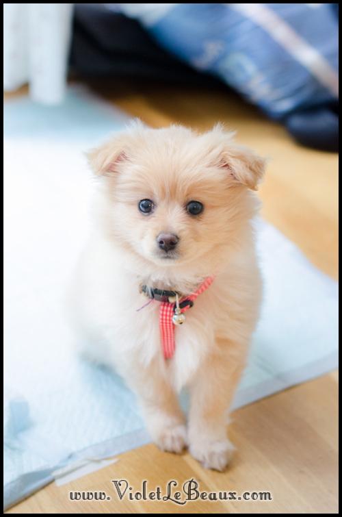 Lottie Dog Toy