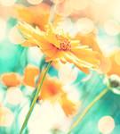 Sunflowery days.
