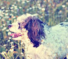 FlowerfulDoggie.... by airicalush