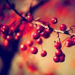 BerryAutumn....