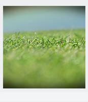 Grass?? by airicalush