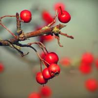 BerriesTopia. by airicalush