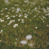 FlowingNoise... by airicalush