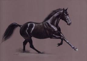 Black horse by Julyart