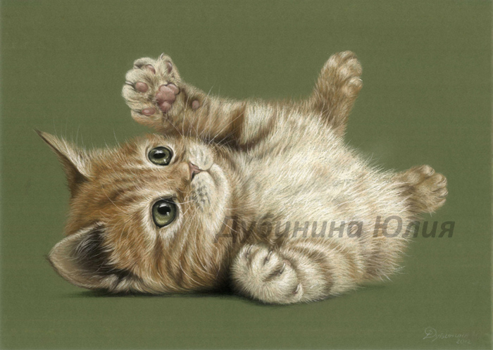 Kitten by Julyart
