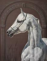 Grey arabian by Julyart