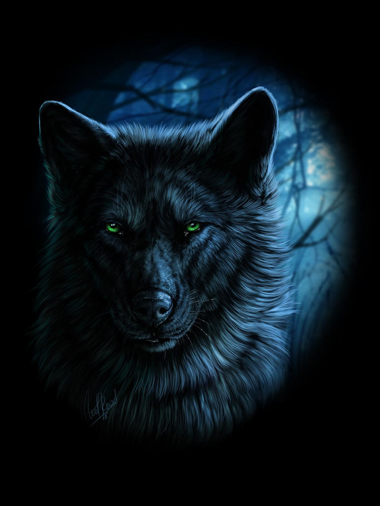DarkWolf by DonkereWolf