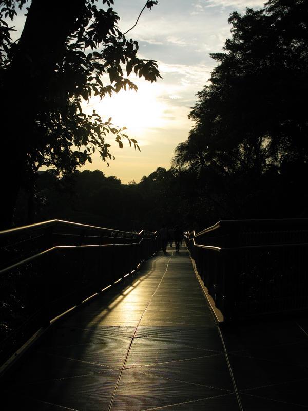 Path by ShirinGarou