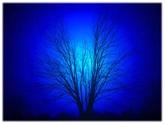 Blue Tree by jwa