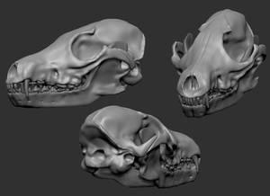 3D Fox Skull
