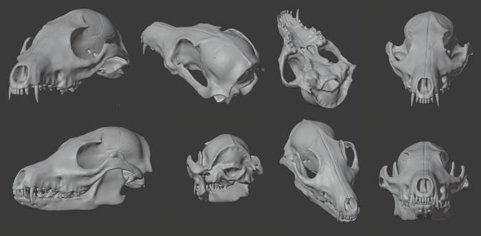 Red Fox Skull Final