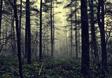 the fog of illusion.. by RickHaigh