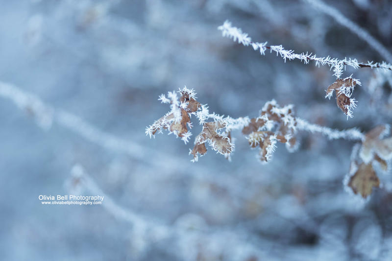 Frosty - Day 122 by escaped-emotions