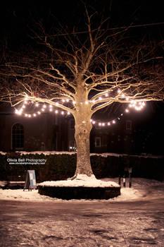 Christmas Lights - Day 141