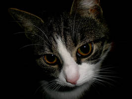 portrait of female cat by frimmi