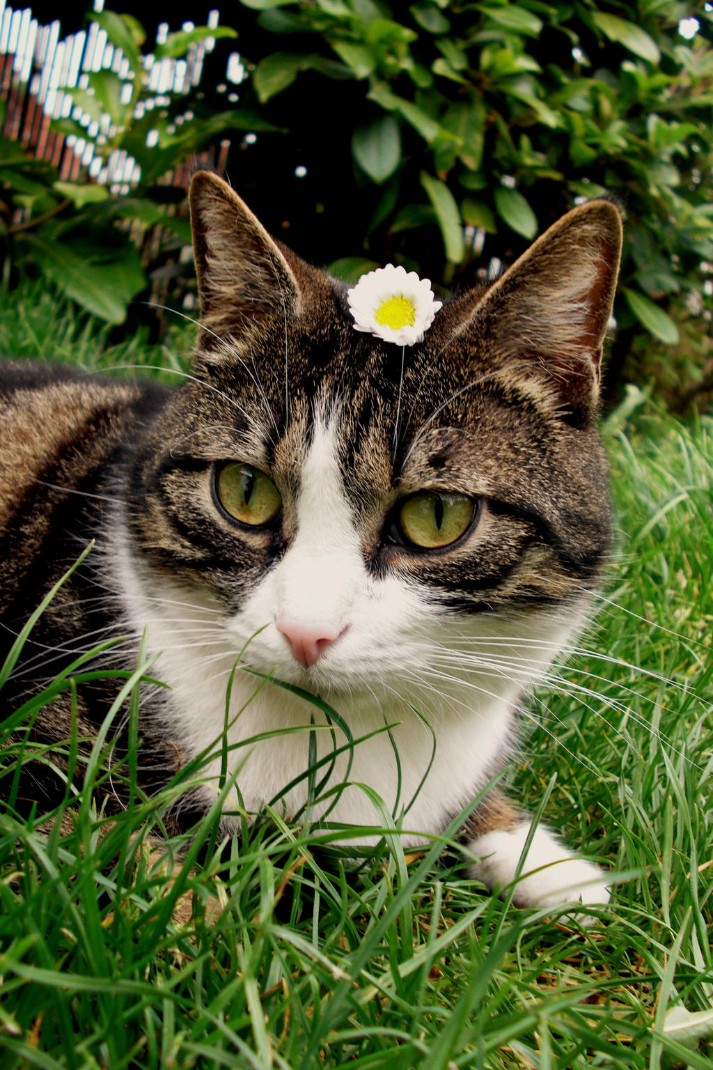 cat with her little flower by frimmi