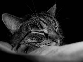 sleeping beauty by frimmi