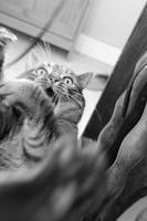 funny cat by frimmi