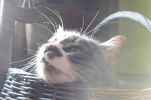 sunbathing by frimmi